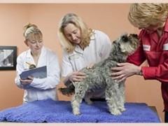 多格儿专业提供广州宠物快递,享受多格儿品牌服务