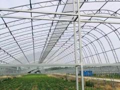 连栋大棚12米跨度8连栋双膜骨架每平米造价低农户好接受