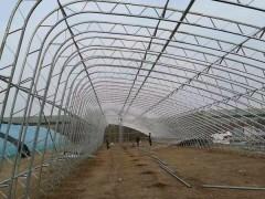 25米宽80米选用120型2.5厚度双梁骨架无立柱多少钱一亩